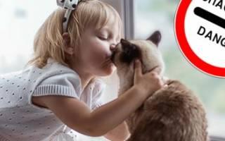 Почему кошки не любят когда их целуют – почему нельзя целовать кошек в морду?