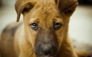 Как отучить щенка гадить где попало, до скольки месяцев собака гадит дома