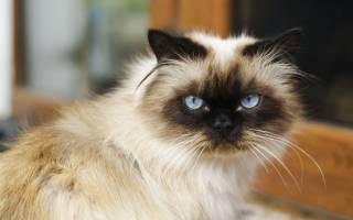 Слюнотечение у кошек причины и лечение – кот пускает слюни