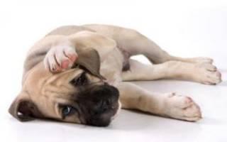 Собака отказывается от еды и много пьет