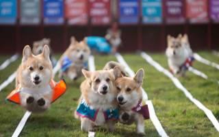 Английские породы собак фото с названиями, британский пес