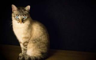 Кот прячется в темные места, котенок спрятался и не выходит