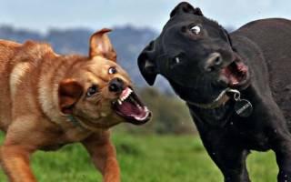 Как подавить агрессию у собаки?
