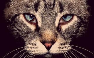 Блефарит у кошек симптомы и лечение фото – покраснело веко у кошки