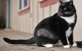 У кота облезает шерсть на спине, плешь у кошек