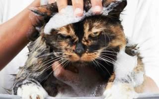 Сухой шампунь для кошек отзывы