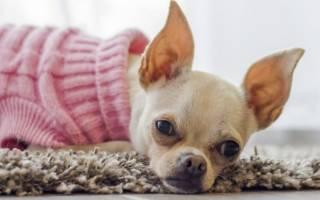 Как вызвать течку у собаки?