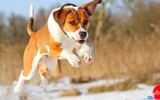 Игры с собакой на прогулке, sabak game