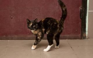 Кошки гадят в подъезде что делать – как отвадить кота гадить под дверь?