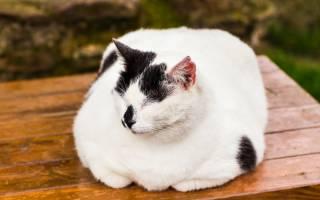 У кота плохо дышит нос что делать: у кошки хрипы при дыхании