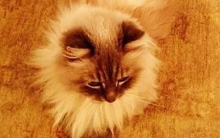 Кот дорофей Медведева фото