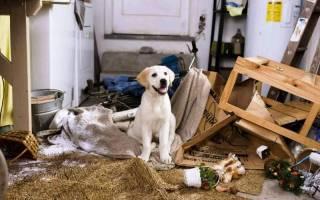 Как отучить собаку грызть провода?
