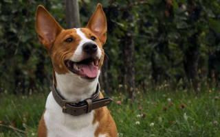 Радикулит у собак симптомы