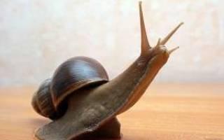Как обустроить террариум для ахатины, поилка для улиток
