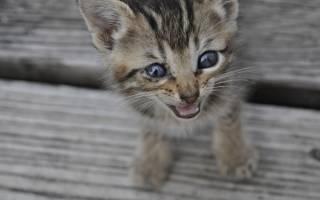 Почему кошка плачет слезами?