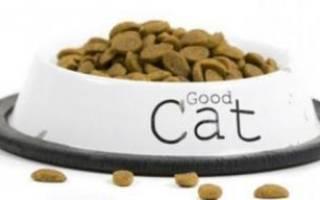 Аллергия у кошек на корм симптомы