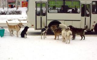 Продолжительность жизни собаки в домашних условиях – сколько живут дворняжки?
