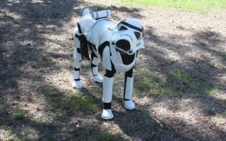 Доберман в костюме, собака из звездных войнов