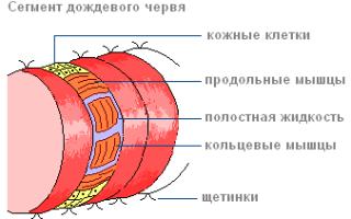 Окраска дождевого червя описание