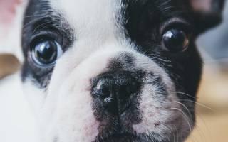 У собаки урчит в животе не ест