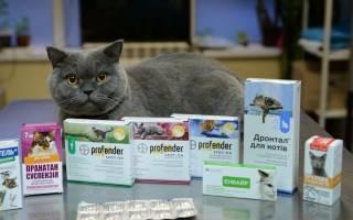 Антибиотики для кошек при гнойных ранах – ампициллин кошкам