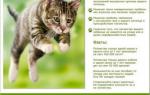 Что будет если не кастрировать домашнего кота – польза кастрации