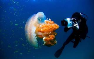 Как называется способ передвижения медузы?