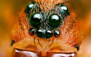 Сколько глаз у паука фото?