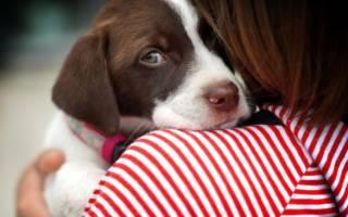 Почему щенок боится гулять на улице?