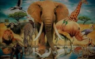 Доклад на тему животный мир