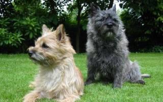 Породы собак от которых нет шерсти?