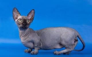 У каких пород кошек не лезет шерсть?
