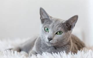 Пердят ли кошки, почему коты не пукают?