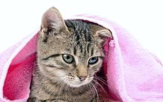 В каком возрасте можно купать котенка – купание котят