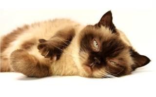 Как ведет себя кошка после вязки?