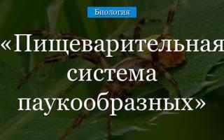 Где начинается переваривание пищи у пауков – особенности пищеварения паукообразных