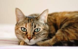 У кота аллергия чем снять зуд – чем лечить кошку если она чешется?