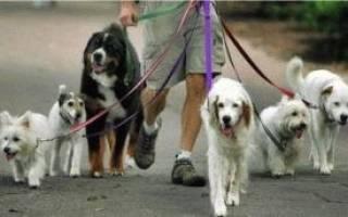 Можно ли гулять со щенком до прививки?