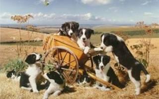 Итальянские клички для собак