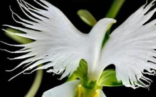 Описание красоты цветов