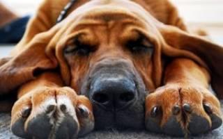Как подстричь собаке когти в домашних условиях, как стричь ногти щенку?
