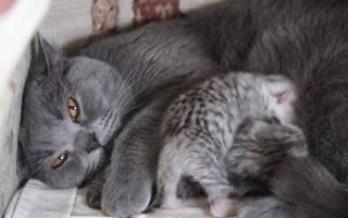 С каким интервалом рождаются котята