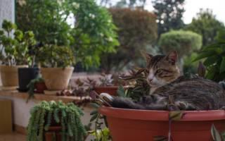 Как отучить кота лазить в цветы – кошка копает землю в горшках