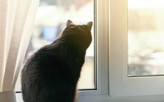 Как приучить кота к улице?