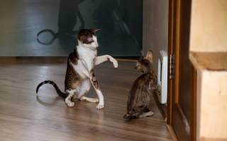 Как коты метят территорию в квартире, как отучить кошку метить?