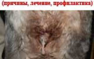 Воспаление матки у собак симптомы и лечение, пиометра у сук