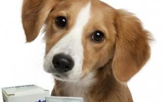 Смекта для собак дозировка на кг веса