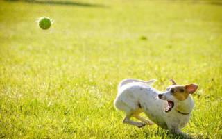 Болезнь суставов у собак симптомы и лечение