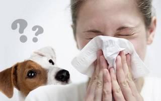 Как избавиться от аллергии на собак?