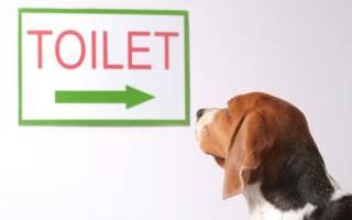 Как приручить щенка к туалету на улице?